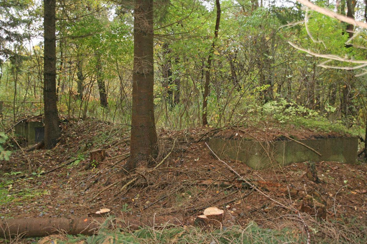 Splitterschutzröhre im Gelände, verdeckt durch Bäume und Laub. Die Bilder entstanden nahe der Siedlung Karlshagen. (HTM Peenemünde, Archiv)