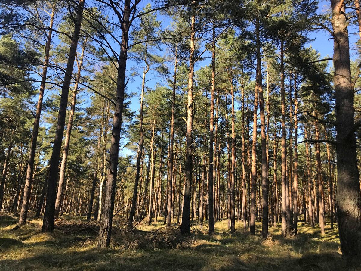 Wald im Naturschutzgebiet.  Foto: Xiaoxu Zhang, 2018
