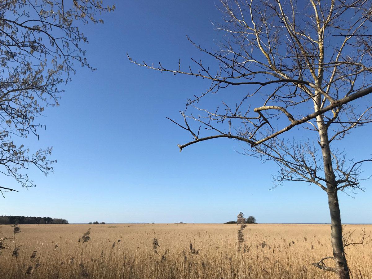 Das Naturschutzgebiet Peenemünder Haken heute.  Foto: Xiaoxu Zhang, 2018